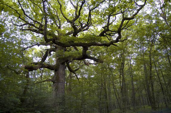 Etreindre des arbres est bon pour la santé 10235410