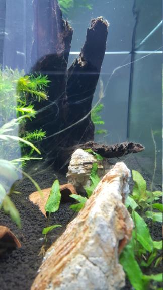 Projet aquarium amazonien - Page 3 15407110