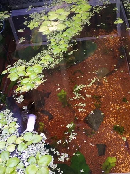 Suivi Aquarium 300L Img_2013