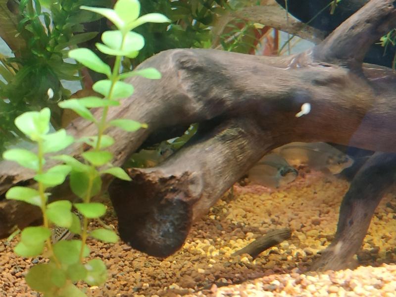 Suivi Aquarium 300L Img_2015