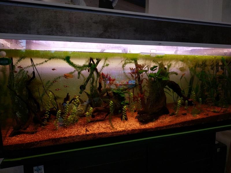 Suivi Aquarium 300L Img_2016