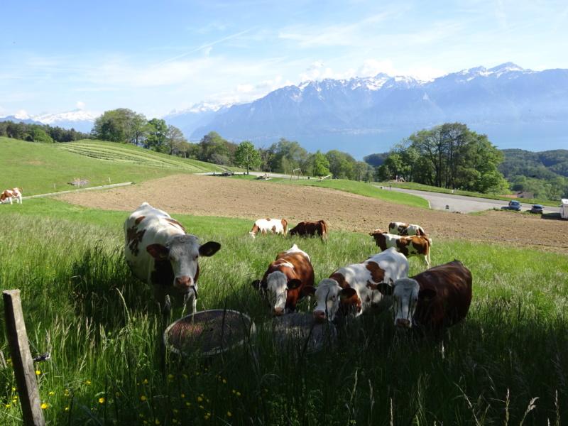 Lac des 4 Cantons, Mt Pélerin, 4 jours en Suisse (Mai-Juin 2019) Dsc00617