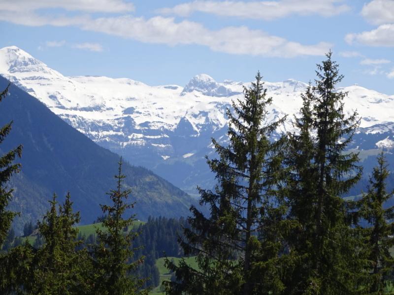 Lac des 4 Cantons, Mt Pélerin, 4 jours en Suisse (Mai-Juin 2019) Dsc09710