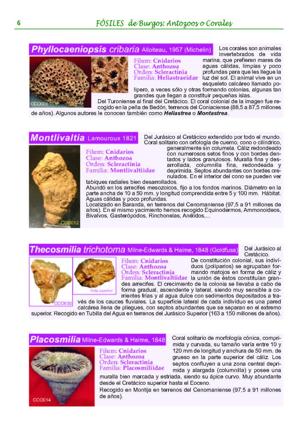 identificación de ¿coral? 0611