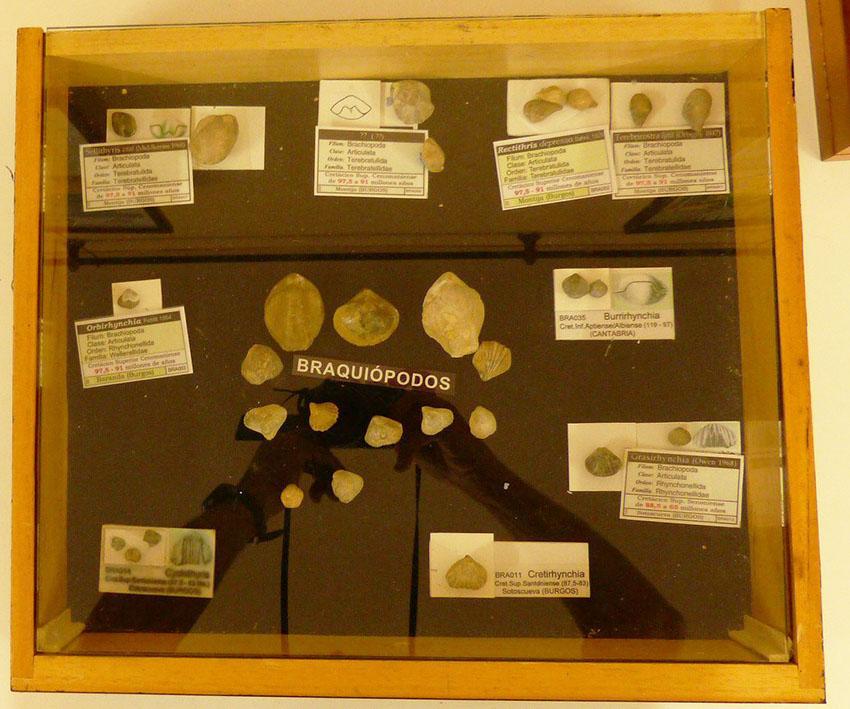 Exposición y charla sobre Fósiles de Burgos  Wbra10
