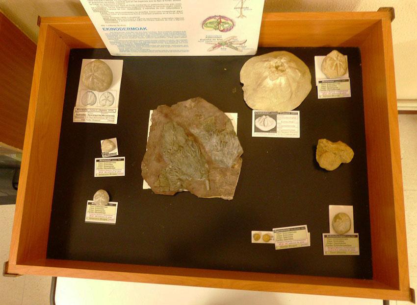 Exposición y charla sobre Fósiles de Burgos  Weeq10