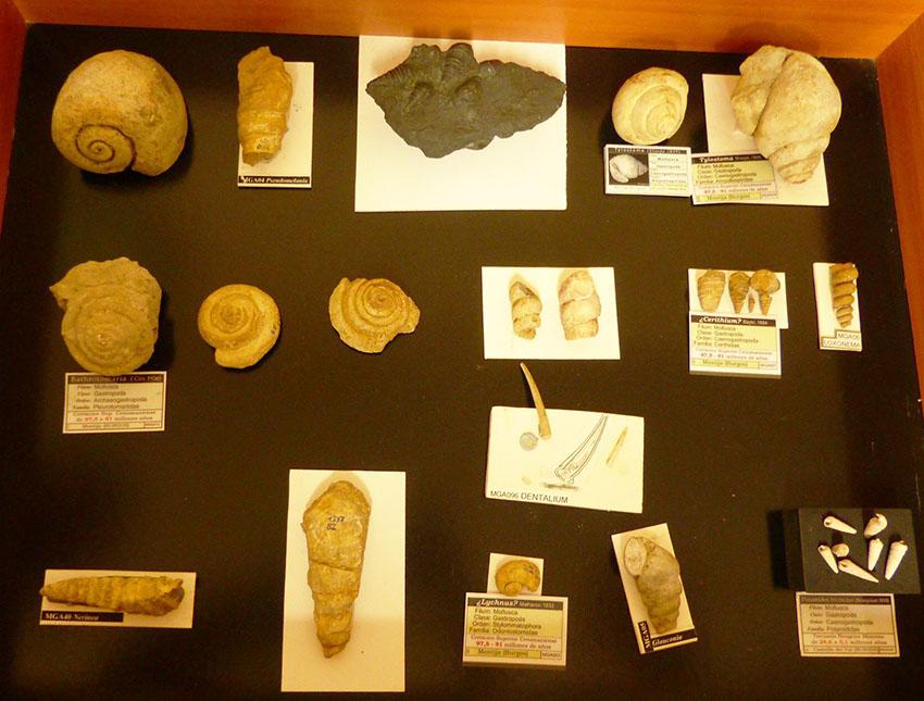 Exposición y charla sobre Fósiles de Burgos  Wmga10