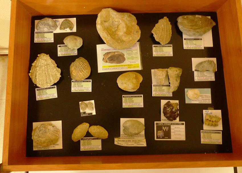 Exposición y charla sobre Fósiles de Burgos  Wmlb10