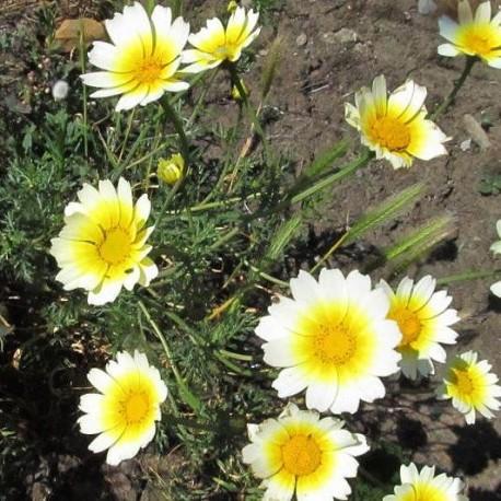 Qui connait cette fleur ? 1272-l10