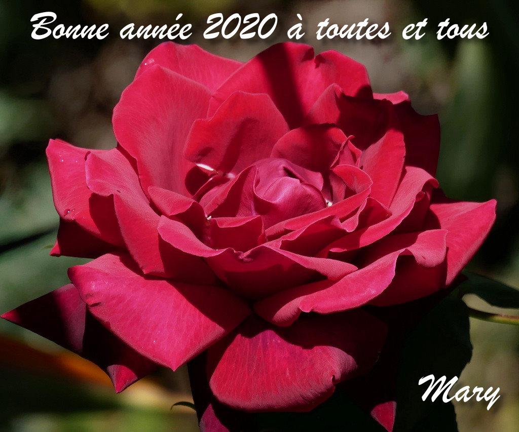 Nouvelle année 2020 Bonne_10