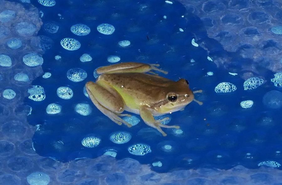 Ce soir, j'ai piscine... Img-2010