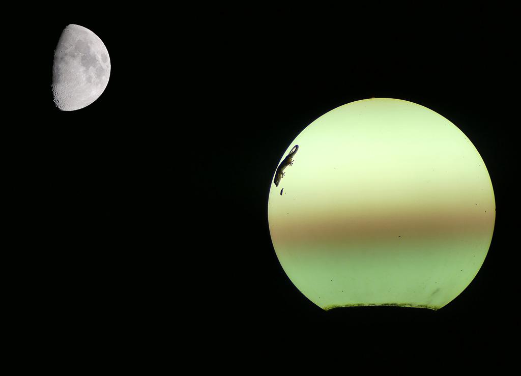 Le lézard et la lune Lezard10