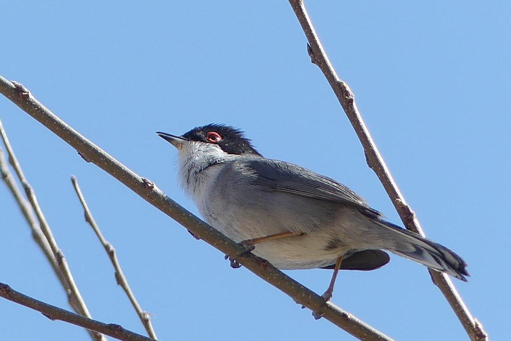 Mon premier tit zoizeau  Oiseau11
