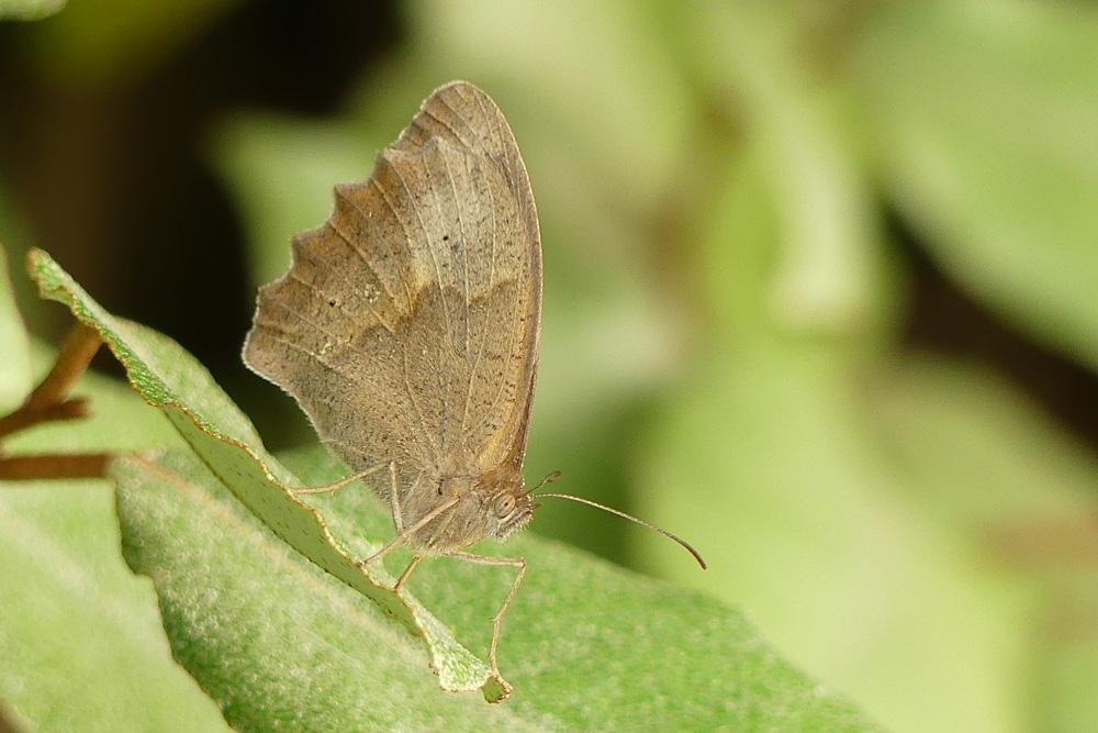 Mon 1er papillon Papill10