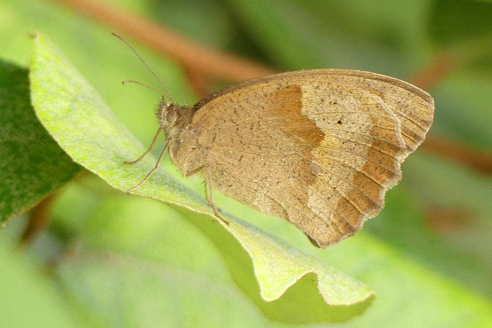 Mon 1er papillon Papill11