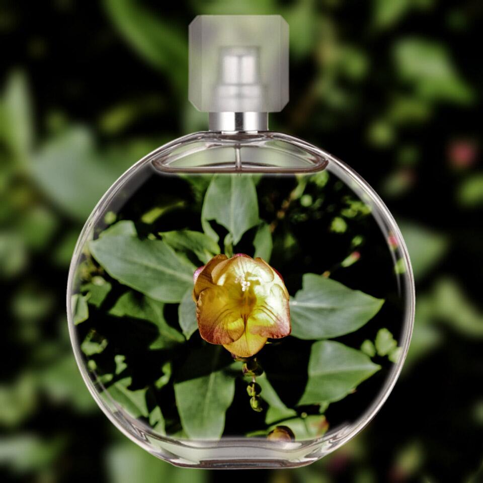 Parfum du jardin Parfum10