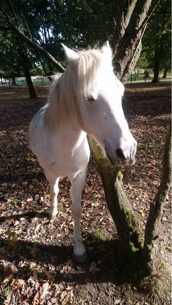 ISABEAU (dit IDEFIX) - ONC Poney né en 2001 - adopté en juillet 2016 par la ferme enfantine de Dammarie les Lys Dsc_1022