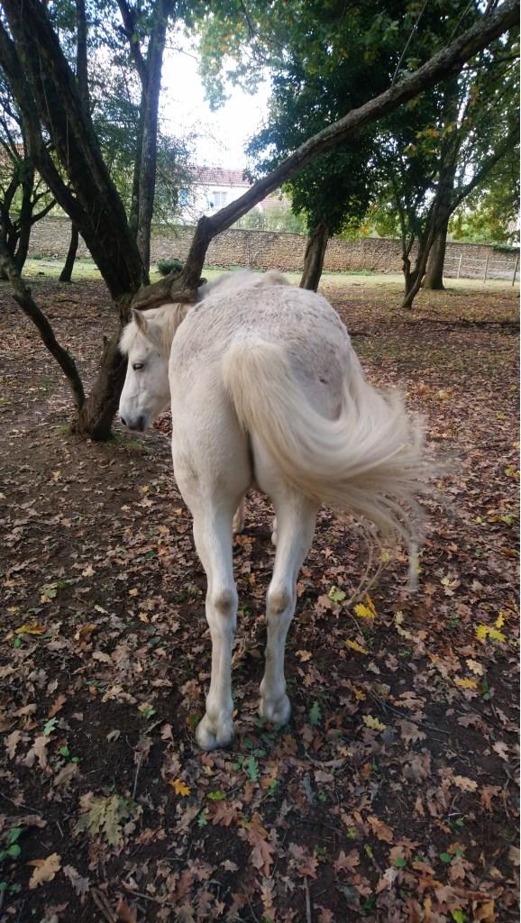 ISABEAU (dit IDEFIX) - ONC Poney né en 2001 - adopté en juillet 2016 par la ferme enfantine de Dammarie les Lys Dsc_1023