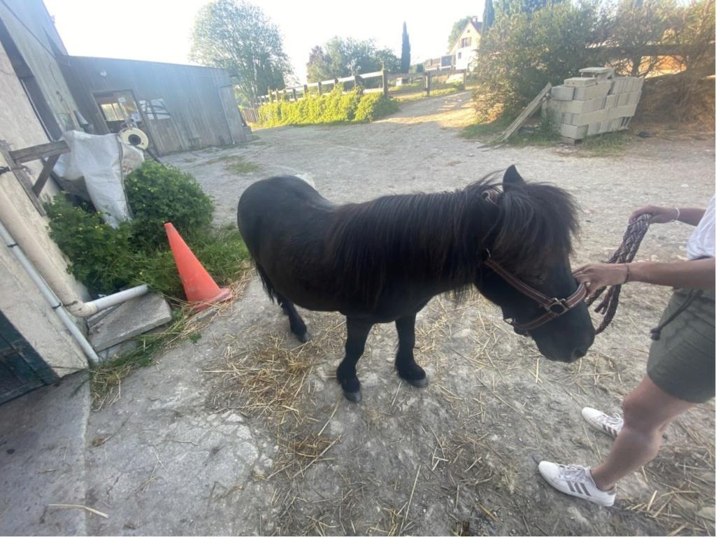NOIROT - ONC poney né en 1997 - adopté en juillet 2016 par Leila Image_12