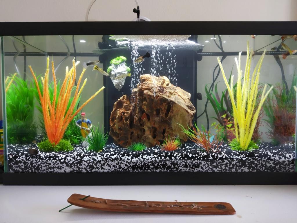 Lancement d'un aquarium 48L (première foi) 15776210