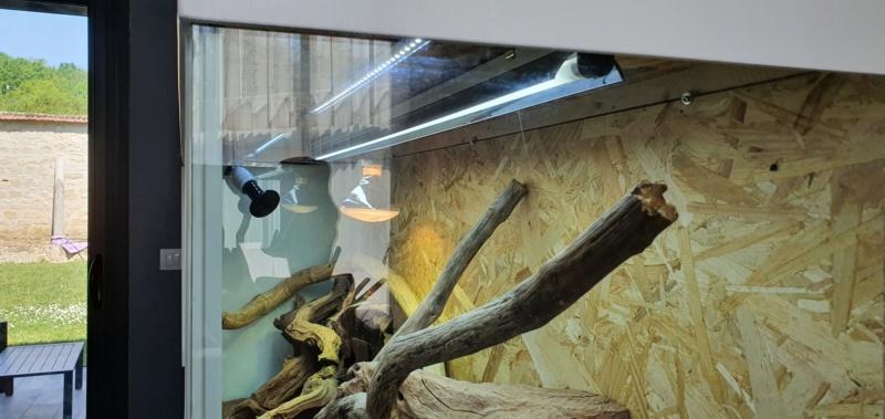 Ancien aquarium en Terrarium pour Bloody 20200411