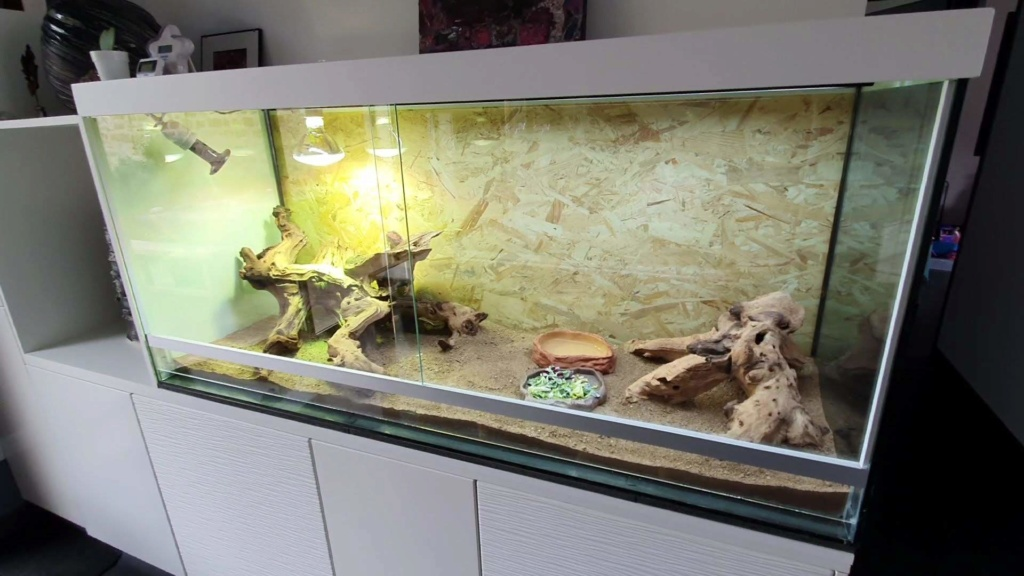 Ancien aquarium en Terrarium pour Bloody Terra_10