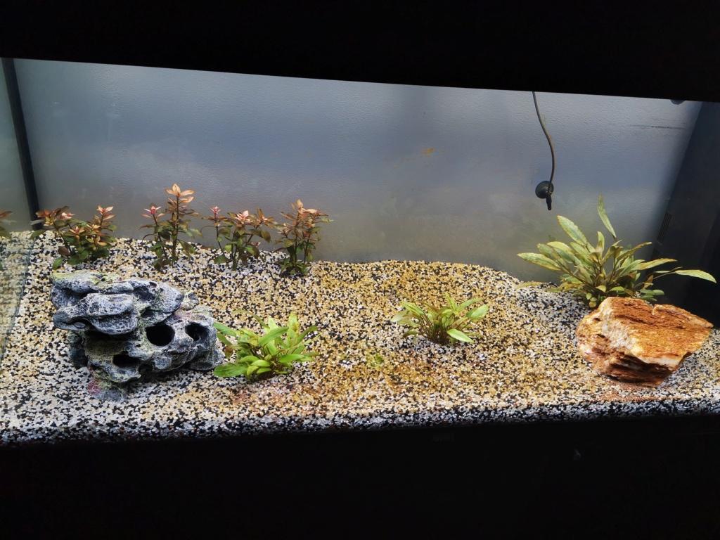 Nouveau aquarium cycle de l'azote 15889210