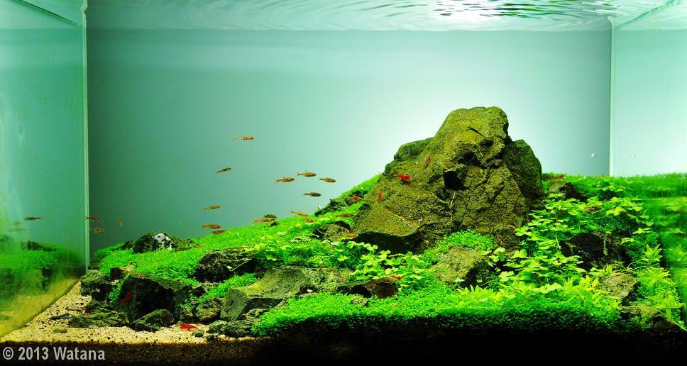 Premier Aquarium : Iwagmi 84L 80ee1e11