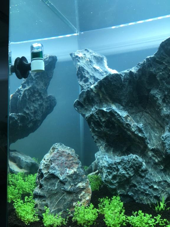 IWAGUMI 84L (premier aquarium) ! Img_1010
