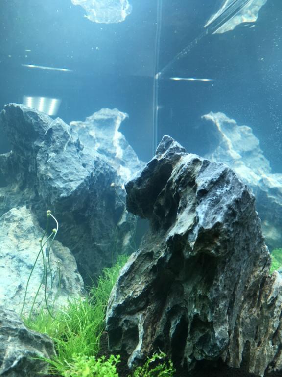 IWAGUMI 84L (premier aquarium) ! Img_1012