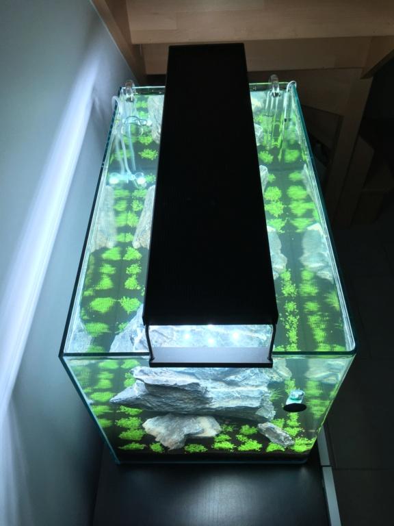 IWAGUMI 84L (premier aquarium) ! Img_1110