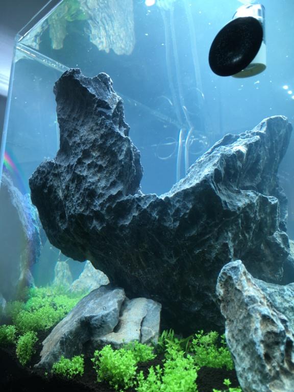 IWAGUMI 84L (premier aquarium) ! Img_1112