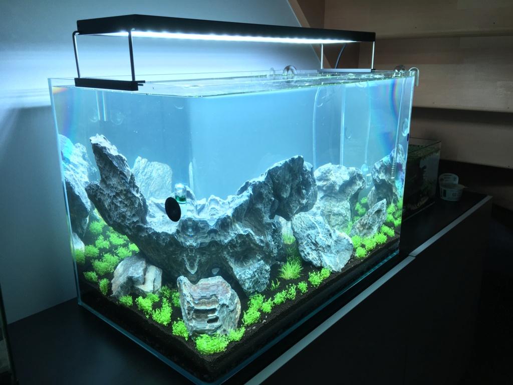IWAGUMI 84L (premier aquarium) ! Img_1113