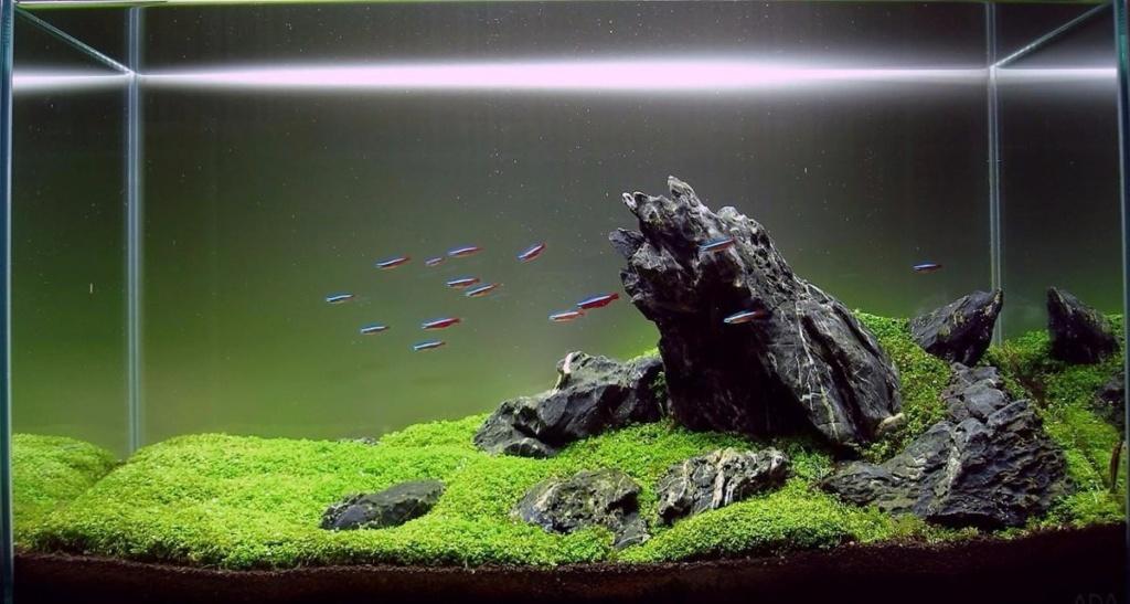 Premier Aquarium : Iwagmi 84L Roca-p11