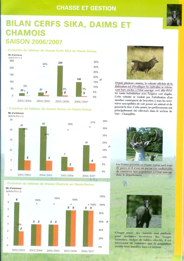 Cerf sika Sika_d10