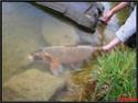 l'Art de la pêche. Capitaine nawapêche Photo010