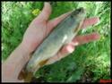 l'Art de la pêche. Capitaine nawapêche Photos24