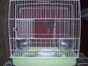 Photos de cage de transport Dscn3519
