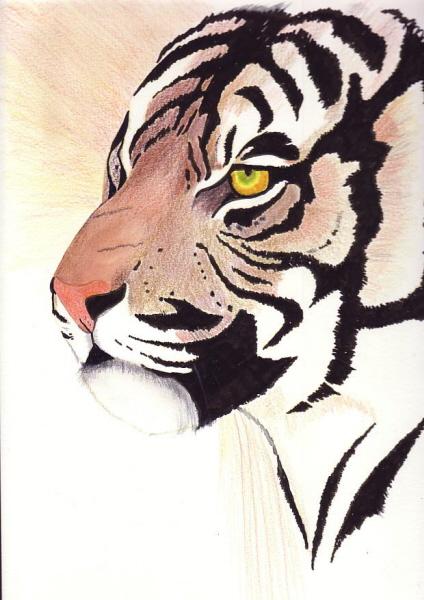 premier dessin cc Tigre_10