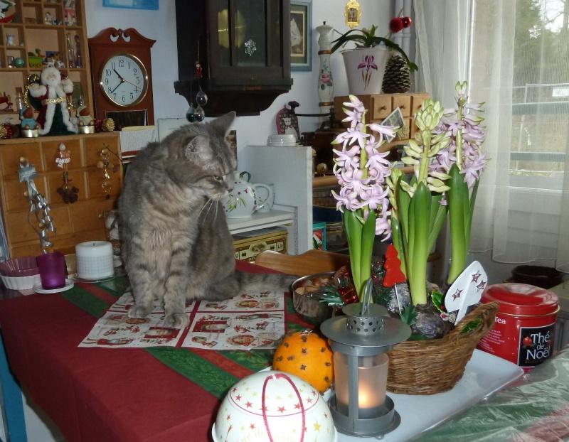Duo de chats jardiniers! - Page 20 P1060824