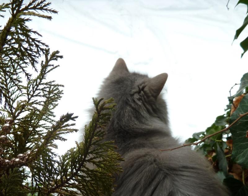 Duo de chats jardiniers! - Page 20 P1070223