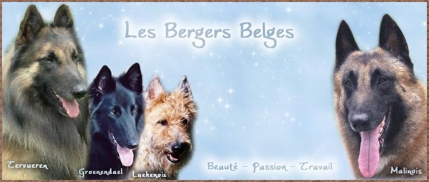 Les Bergers Belges