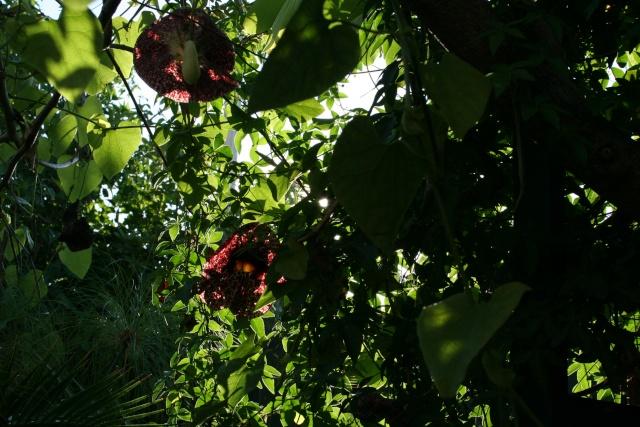 Tour de jardin avec le nouveau reflex Aristo15