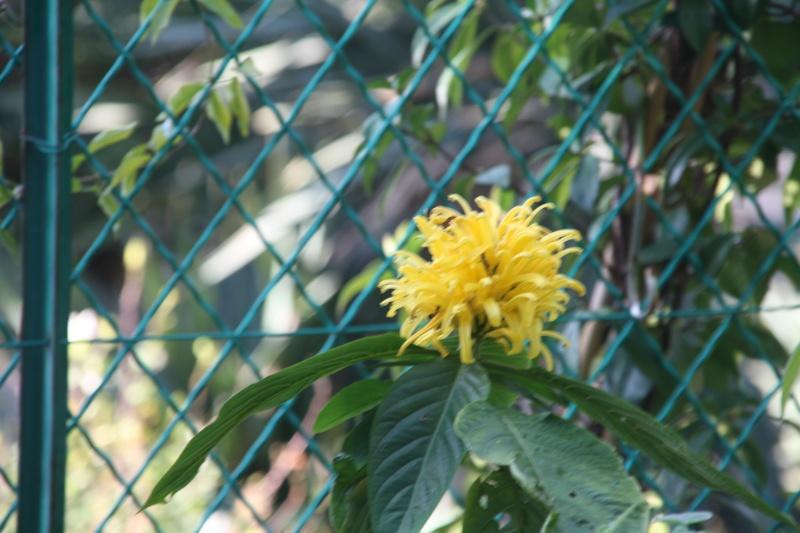 En attendant l'hiver, quelques fleurs de ce matin de janvier 2013 Justic10