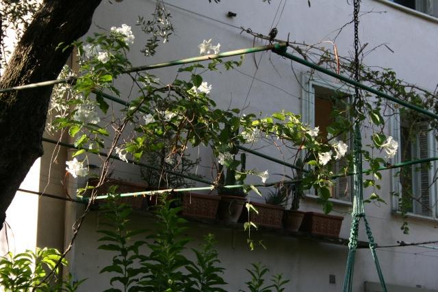 Tour de jardin avec le nouveau reflex Mandev11