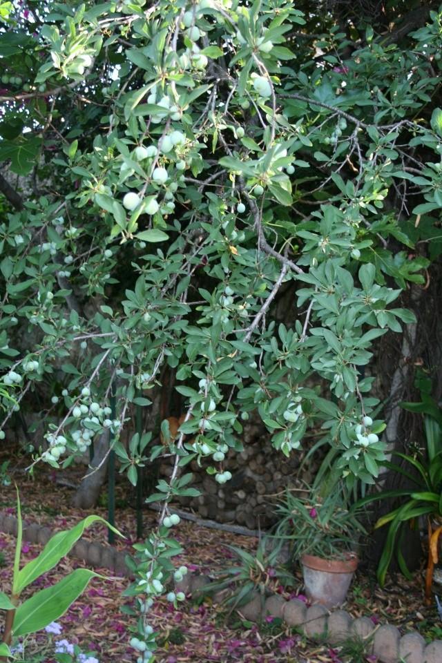 Tour de jardin avec le nouveau reflex Prunus10