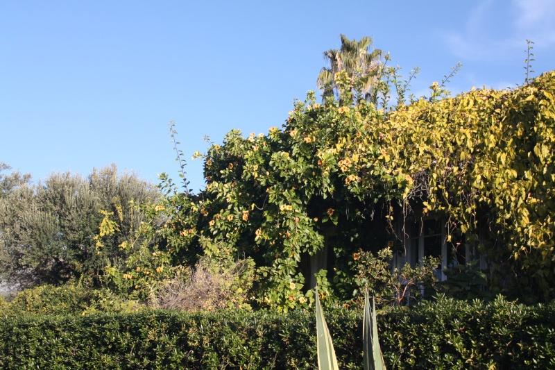 En attendant l'hiver, quelques fleurs de ce matin de janvier 2013 Soland13