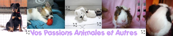 Passion animal et autres Logo1_10