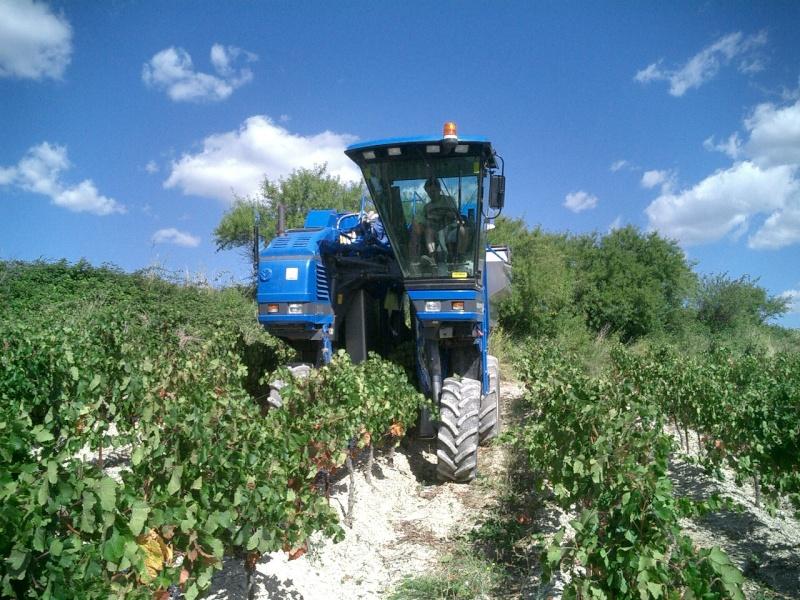 Le raisin ( les vendanges) Cuma2010