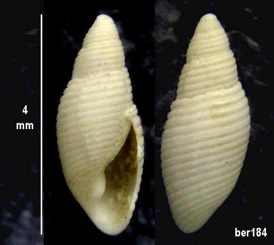 langhien de touraine Ber18410